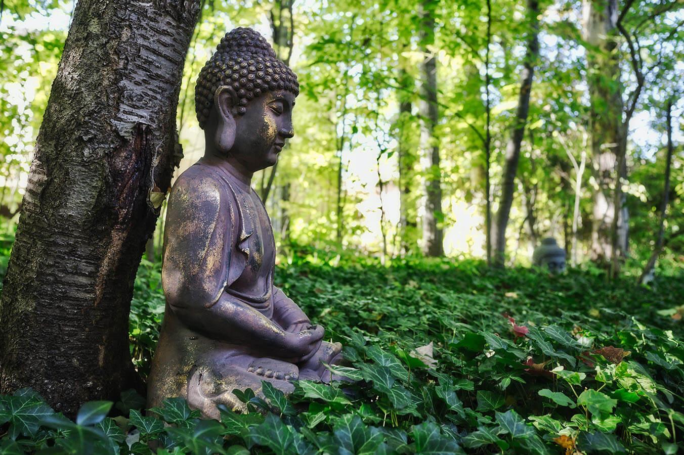 buddyzm i nauki buddy